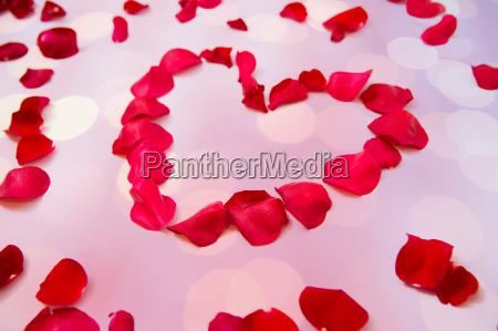 close up of red rose petals