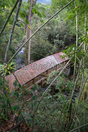 roofed bamboo bridge in the jungle