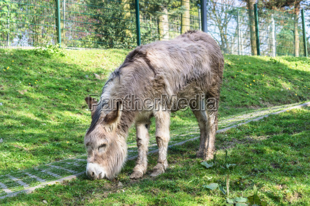 donkey on a green meadow