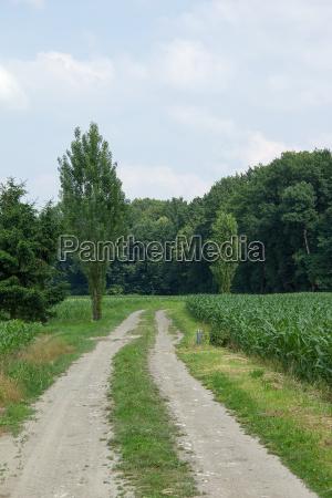 gravel road between corn fields and