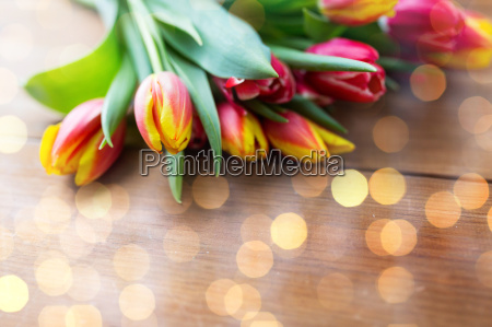 close up of tulip flowers on