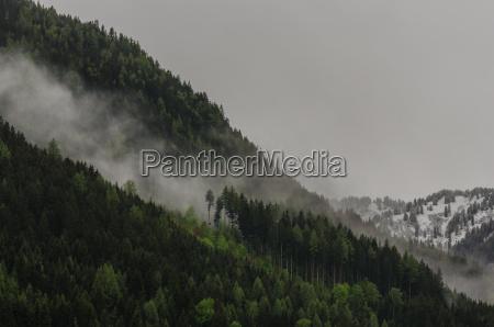 fog on mountain with baeume
