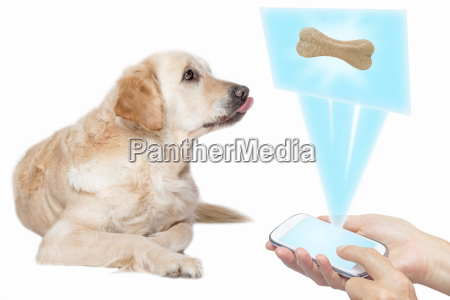 dog and technology concept