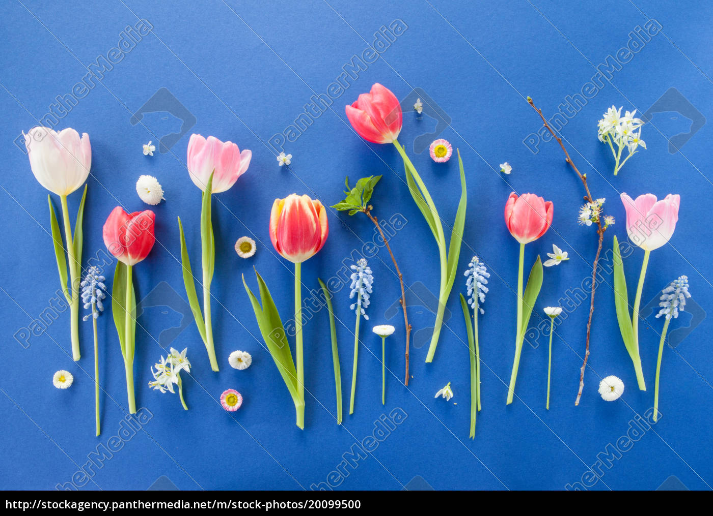 colorful, spring, flowers, on, blue - 20099500