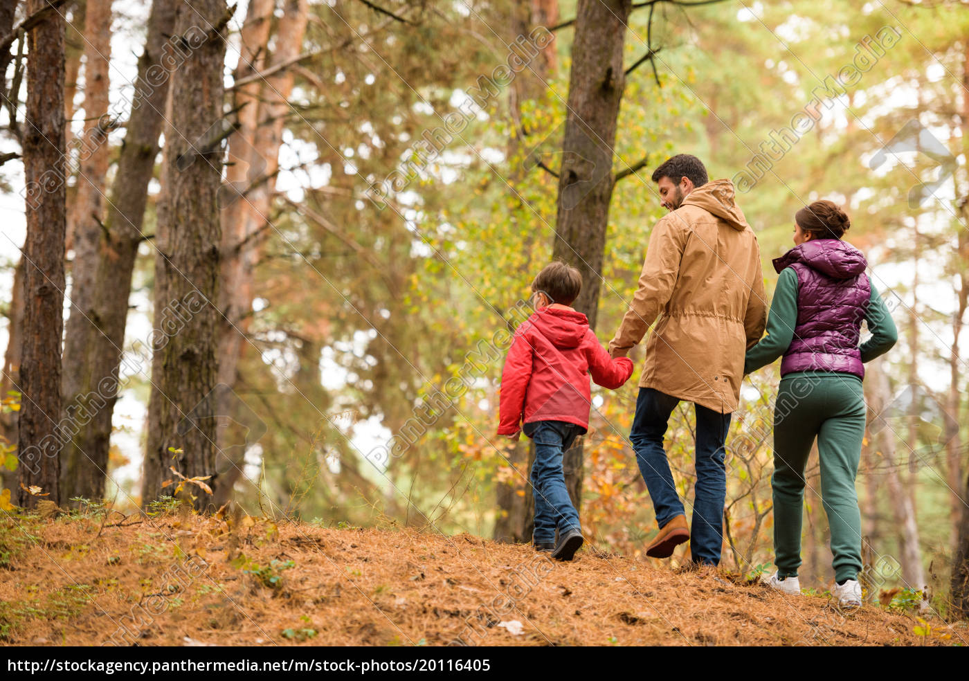 family, walking, in, autumn, forest - 20116405