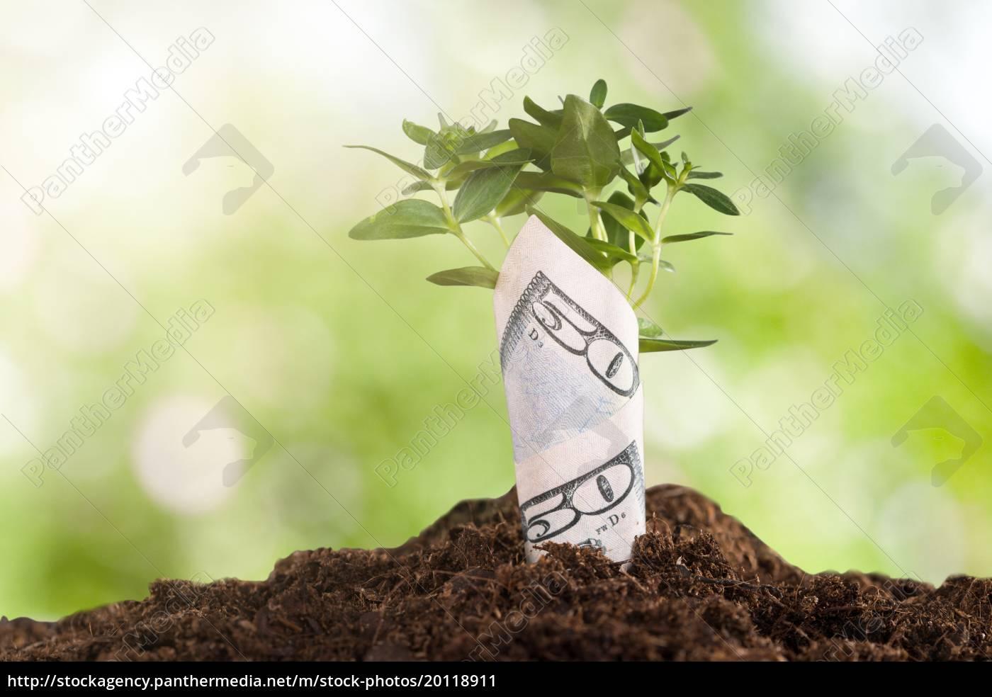 sapling, wrapped, in, dollar, bill - 20118911