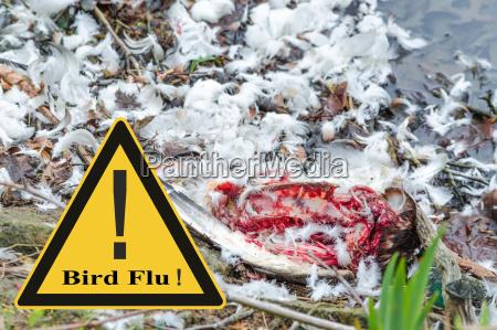 symbolic general prevention against avian flu