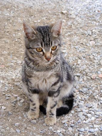 pet cat pictures