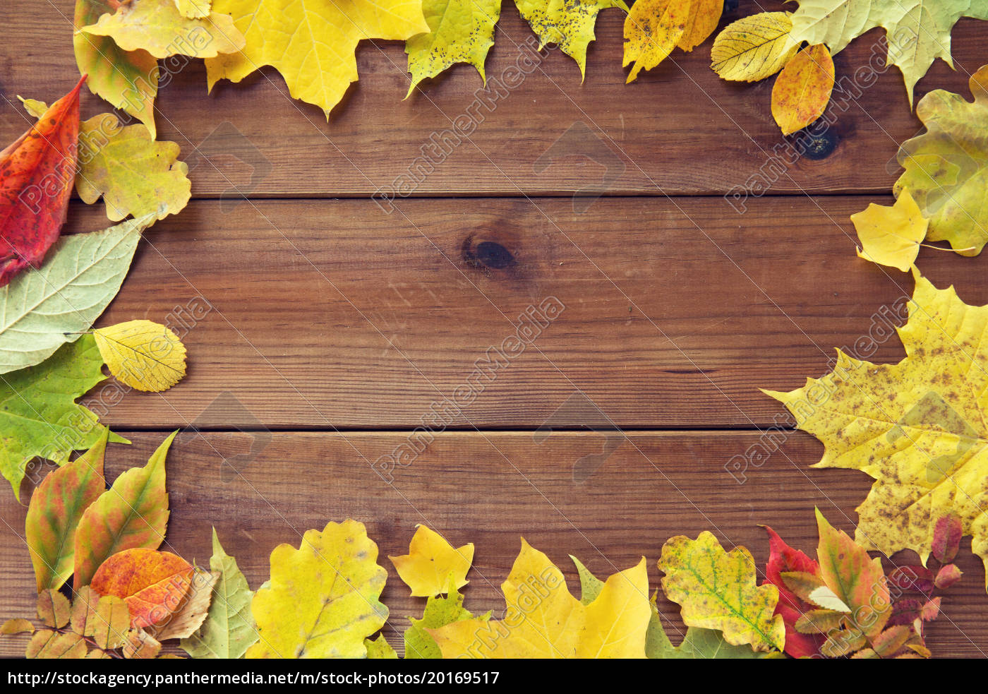 frame, of, many, different, fallen, autumn - 20169517