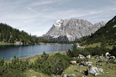 austria tyrol ehrwald seebensee with zugspitze
