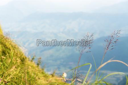 flower grass on the mountain
