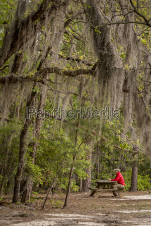 spanish moss hangs over a picnic