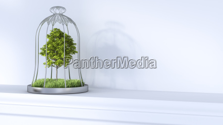 tree in cage on shelf