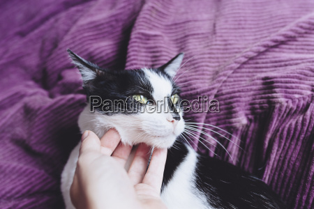 womans hand stroking black and white