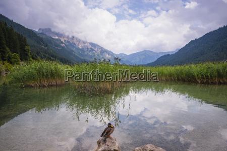 austria tyrol tannheim valley lake haldensee
