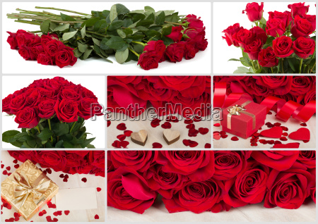 collection of fresh valentine red roses