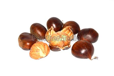 chestnut pictures