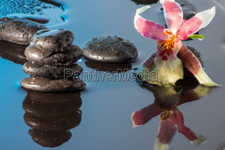 orchid mirroring in water and black