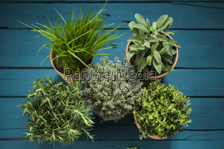 potted herbs sage thyme rosemary oregano