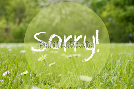 gras meadow daisy flowers text sorry