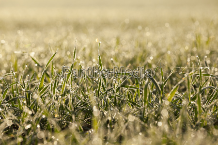 young, grass, plants, , close-up - 20292389