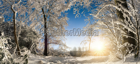 enchanted, winter, landscape, with, sun, snow, on - 20334661