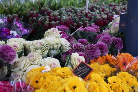 bunches of multicolored flowers greens and