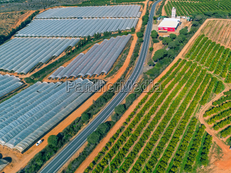 aerial view fruit and orange trees