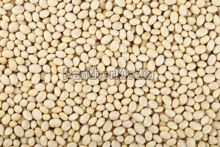 white frigole kidney beans close up