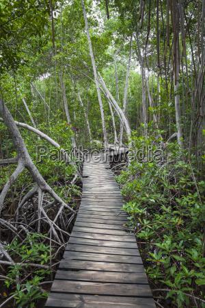 wood footpath in tropical rain forest