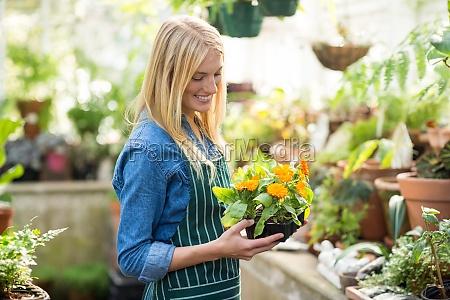 female gardener holding potted plant