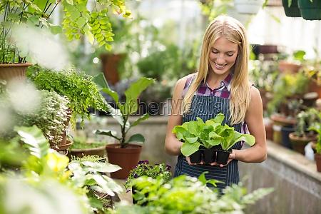 female gardener holding saplings at greenhouse
