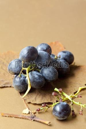 black grapes on a an autumn