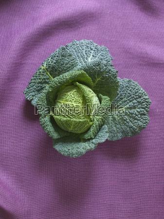 a savoy cabbage on a purple