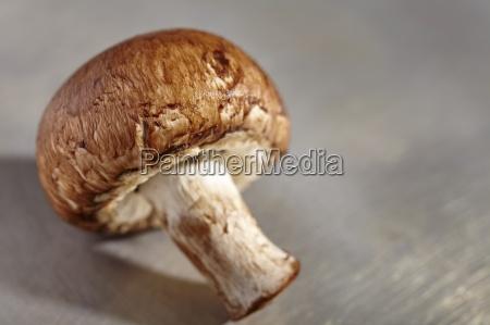 a brown mushroom close up