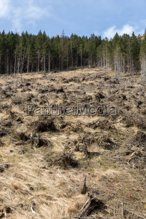 forest being cut down turning