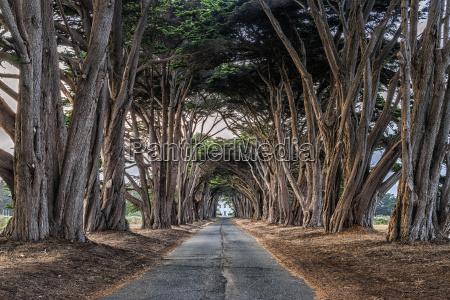 an avenue of trees growing on