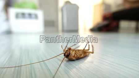 dead cockroach on the floor