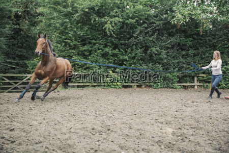 woman exercising a brown horse in