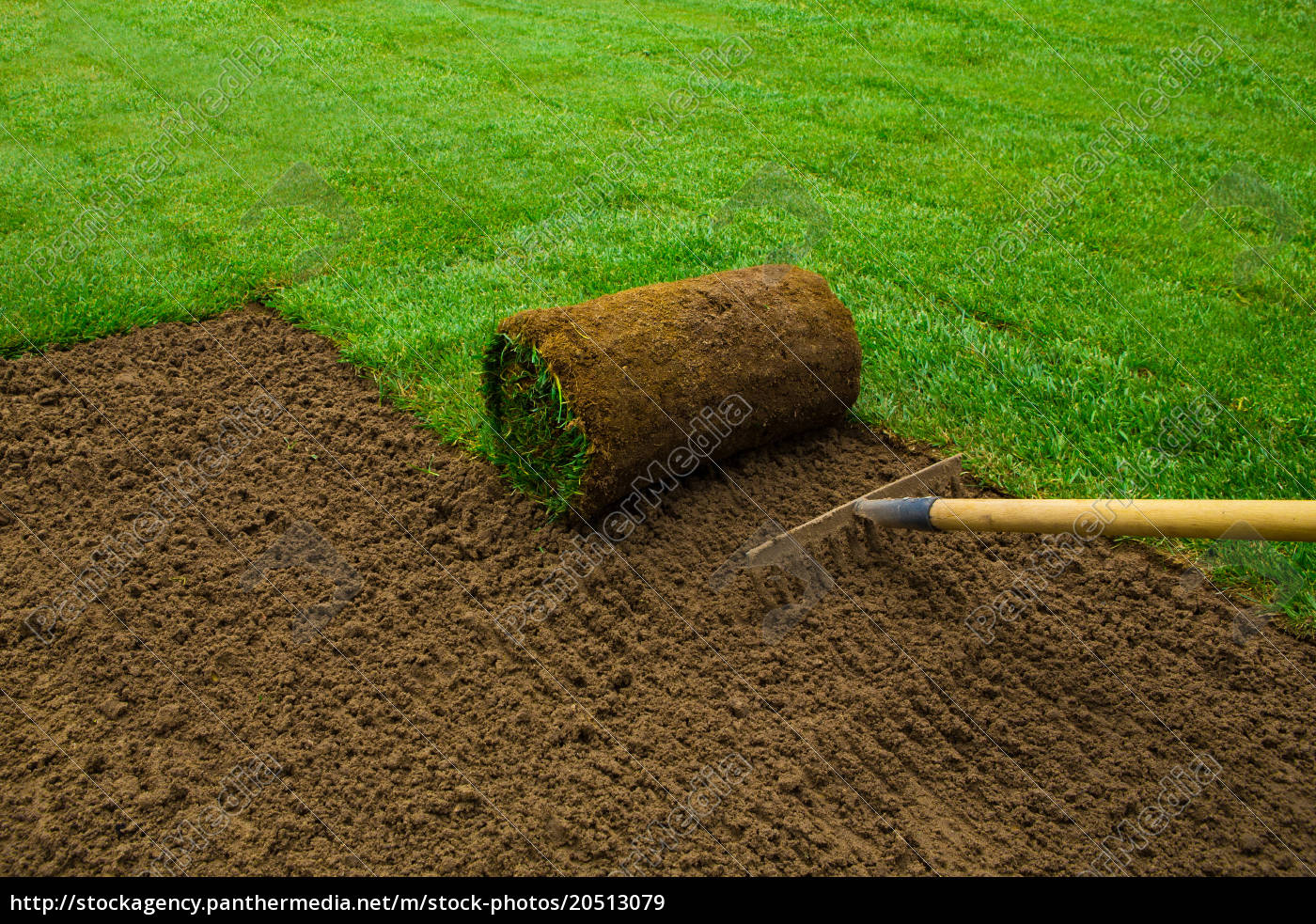 lawned, garden - 20513079