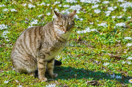 cat on the lawn among the