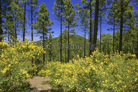 spain tenerife flowers in bloom near