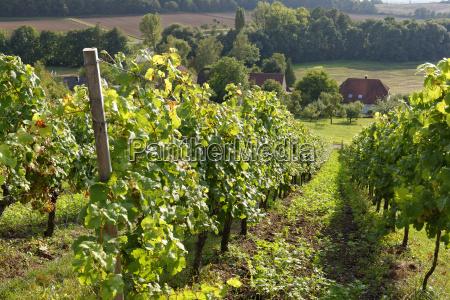 germany handthal vineyard