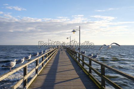 germany usedom bansin seagulls at pier