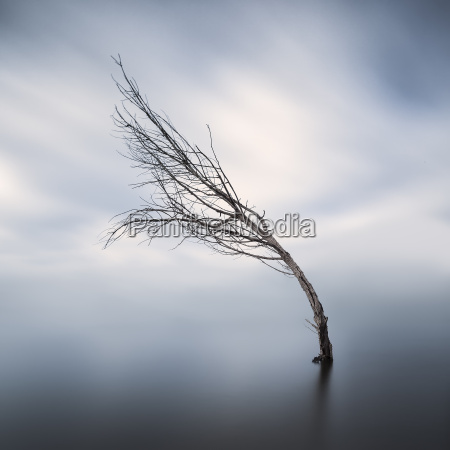 bent bare tree standing in lake