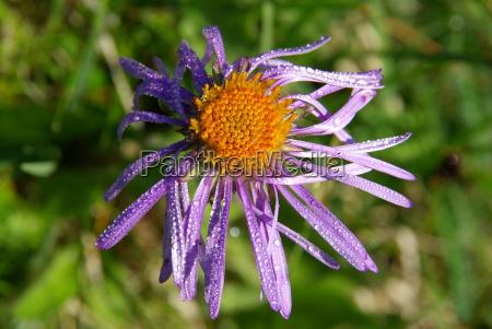 beautiful mountain flowers flora of mountain