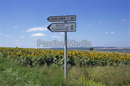 road sign and sunflowers route de