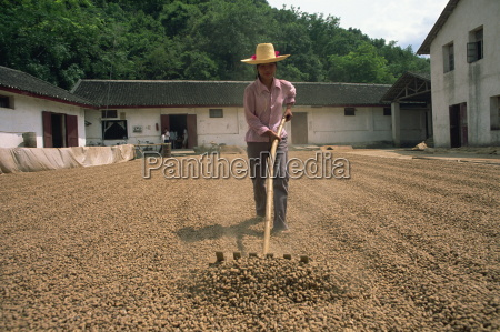 turning peanuts fuli china asia
