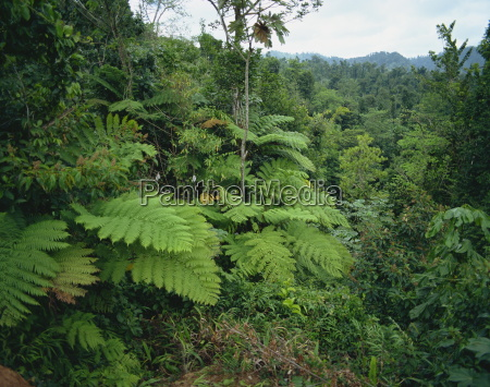 rain forest st lucia windward islands