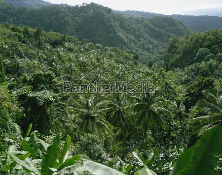 coconut plantation st lucia windward islands